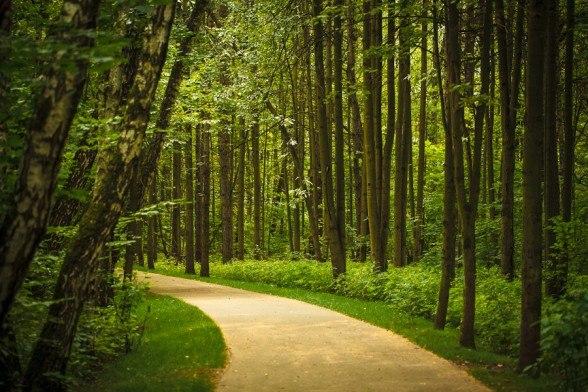 В Битцевском лесу отремонтируют покрытие пешеходных дорожек