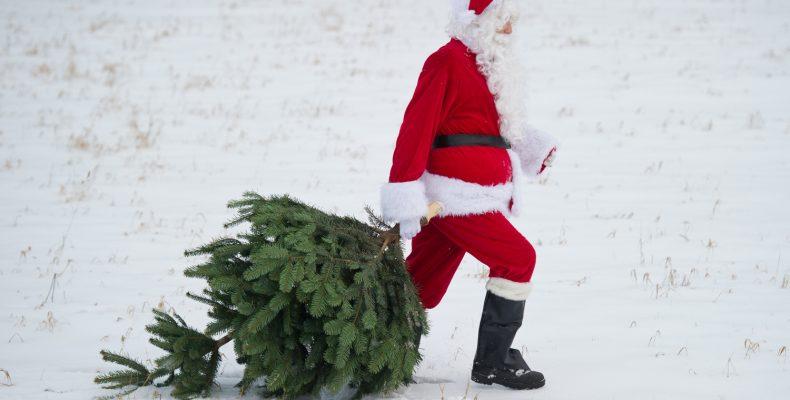 Куда сдать ёлку после нового года?