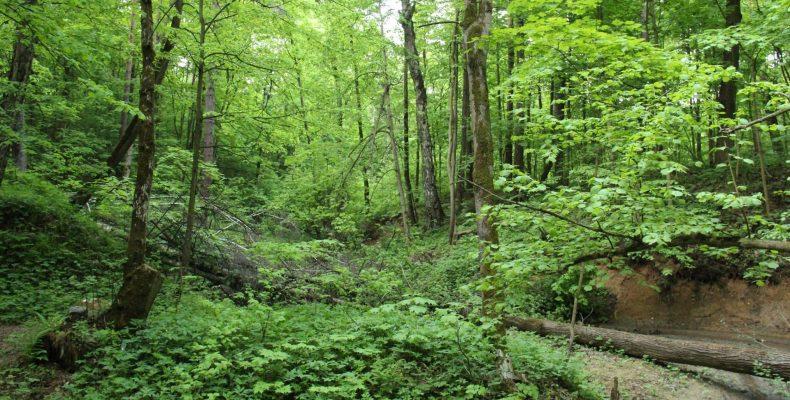 На «Активном гражданине» выберут темы занятий для детей в Битцевском лесу