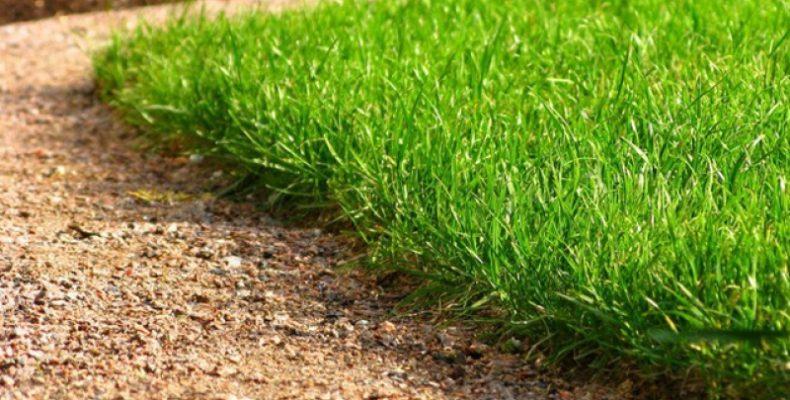 Итоги голосования «Твой газон – твои правила!»