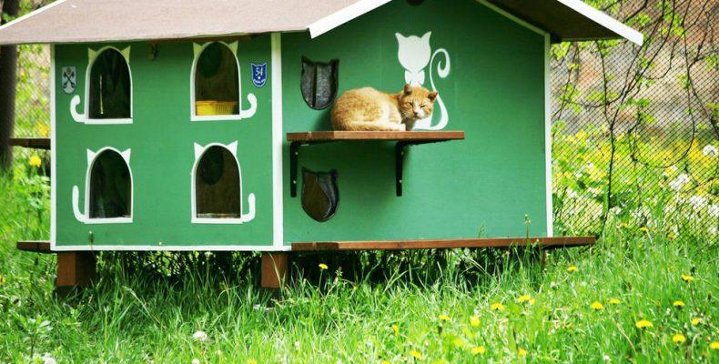 В районе Северное Бутово теперь есть домики для бездомных кошек