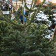 Где купить ёлку в Северном Бутово. Ёлочные базары.