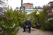 Три ёлочных базара откроют в районе Северное Бутово